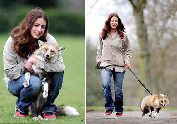 rescued-tame-pet-fox-cub-todd-emma-dsylva-1a