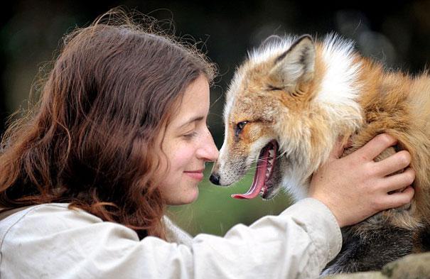rescued-tame-pet-fox-cub-todd-emma-dsylva-3a