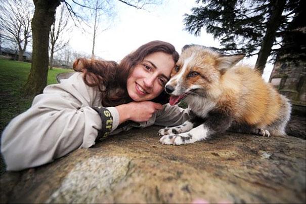 rescued-tame-pet-fox-cub-todd-emma-dsylva-4a