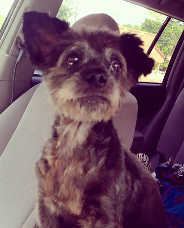 woman-adopts-abandoned-dying-dog-chester-nicole-elliott-1a
