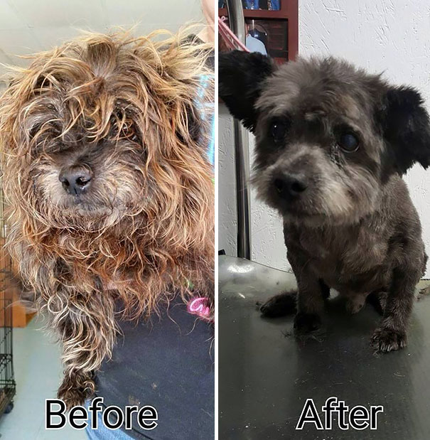 woman-adopts-abandoned-dying-dog-chester-nicole-elliott-6a