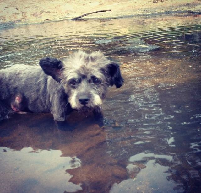 woman-adopts-abandoned-dying-dog-chester-nicole-elliott-8a