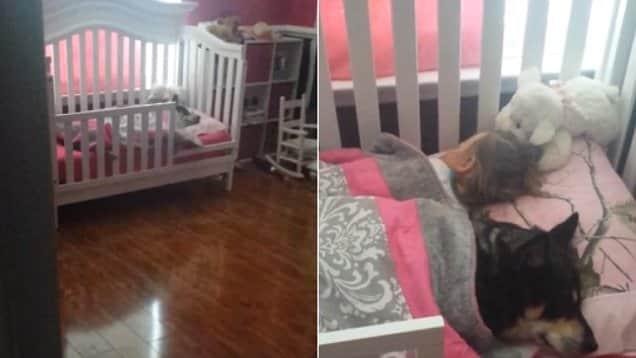 Vídeo de menininha e seu cão resgatado é a coisa mais fofa que vai ver hoje 1