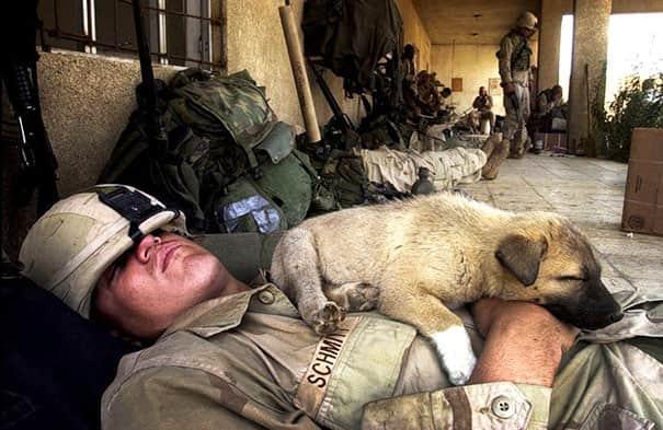 Pets-Of-War2__605