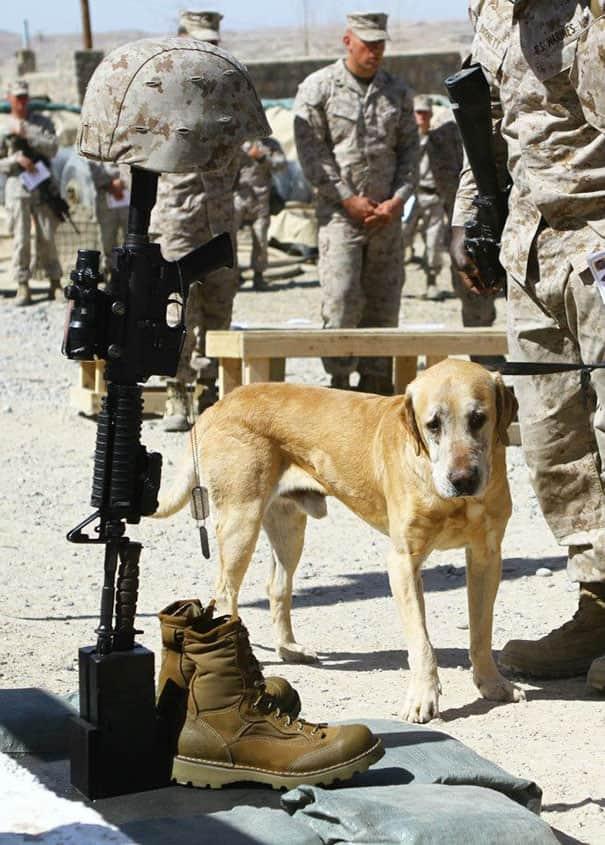Pets-Of-War__605