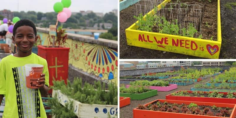 Sem-tetos plantam um imenso jardim orgânico, com capacidade de alimentar um abrigo inteiro 1