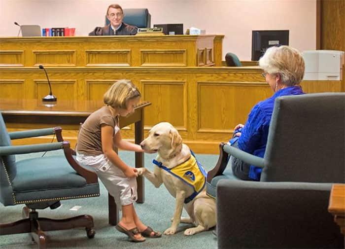 courthouse-dogs-calm-witness-victim-ellen-oneill-celeste-walsen-27