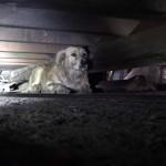 Cadelinha muito assustada tem reação surpreendente ao final de seu resgate 7