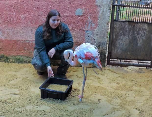 flamingo_vanessa