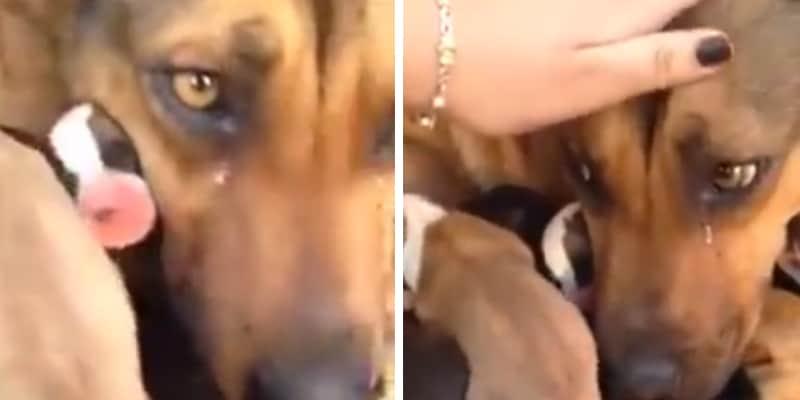 Cachorra de rua chora ao oferecerem comida pra ela e seus filhotes 2