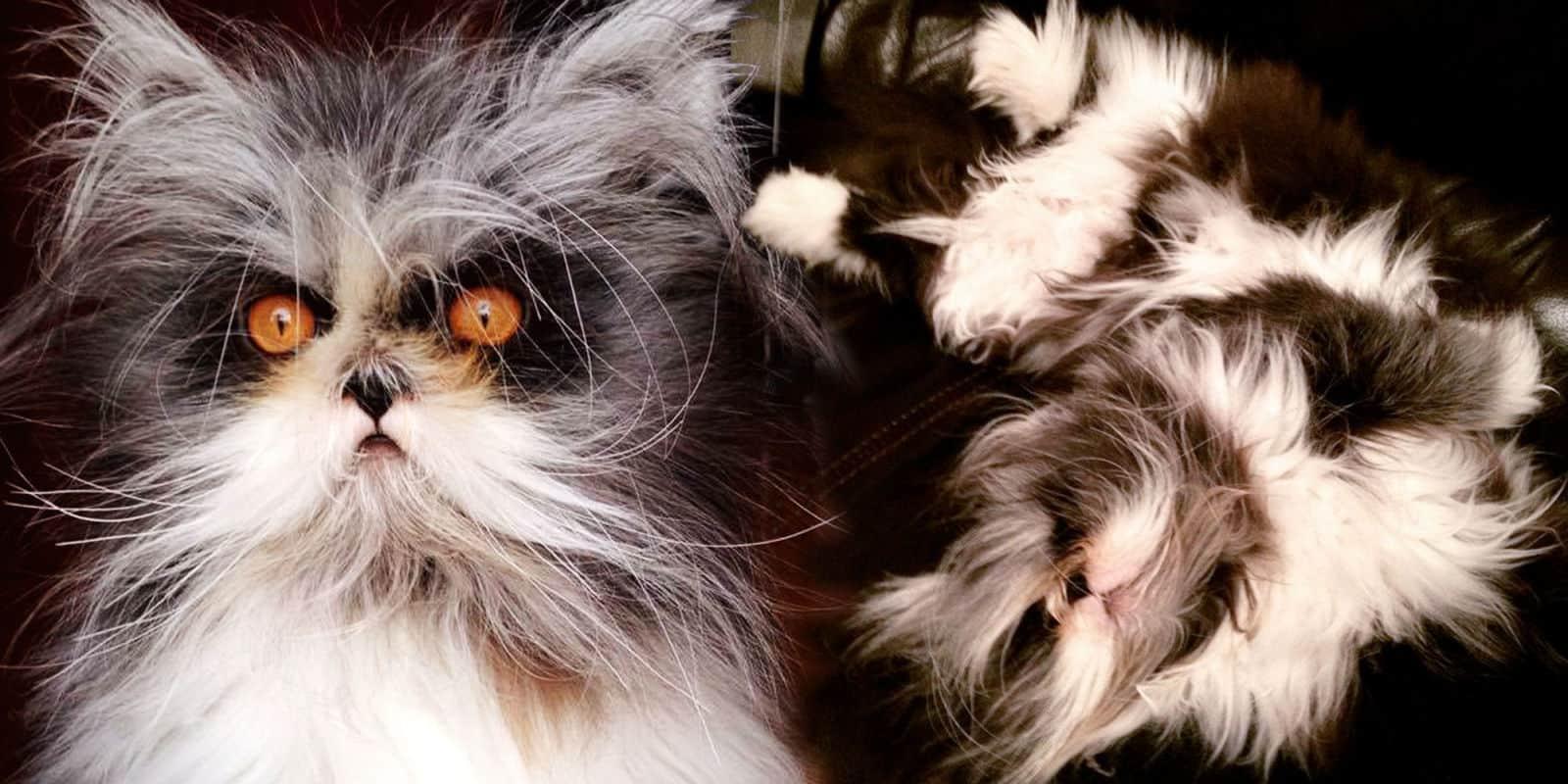 Este gato tem uma doença genética rara, mas isso só significa constantes dias de bons pelos 1