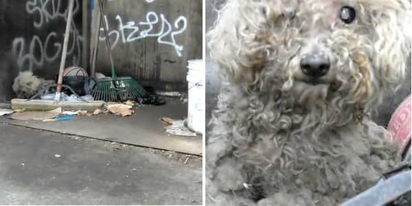 Resgate de cachorrinha cega que vivia numa pilha de lixo vai aquecer seu coração 1