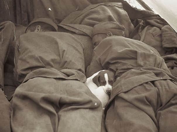 soldier-pet-resque-animal-war-16__605