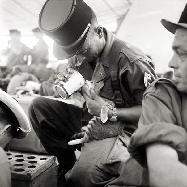 soldier-pet-resque-animal-war-17__605