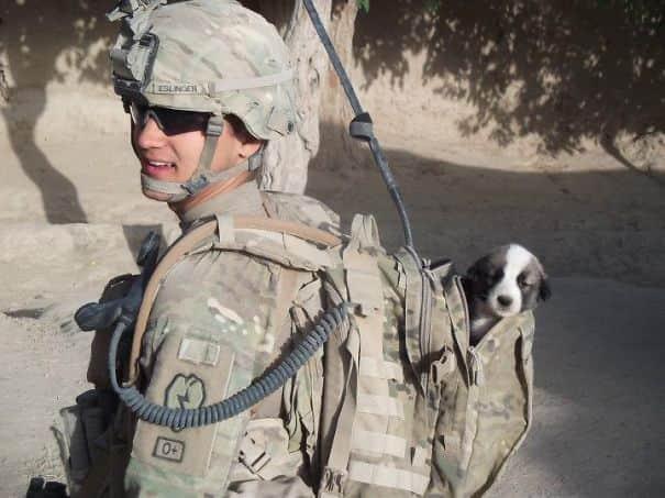 25 soldados e seus animais de estimação em fotos cheias de esperança e amor 6