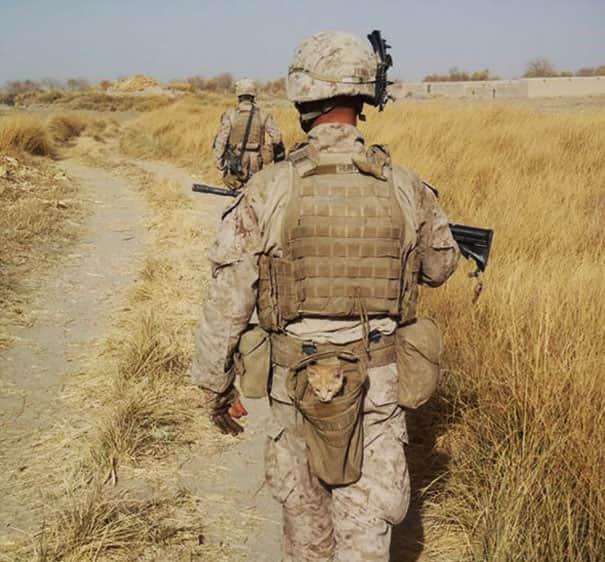 soldier-pet-resque-animal-war-19__605