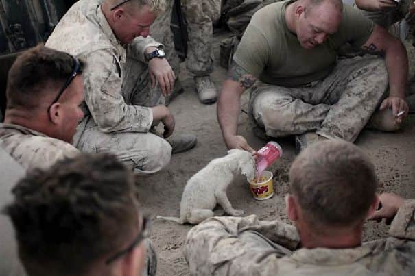 soldier-pet-resque-animal-war-20__605