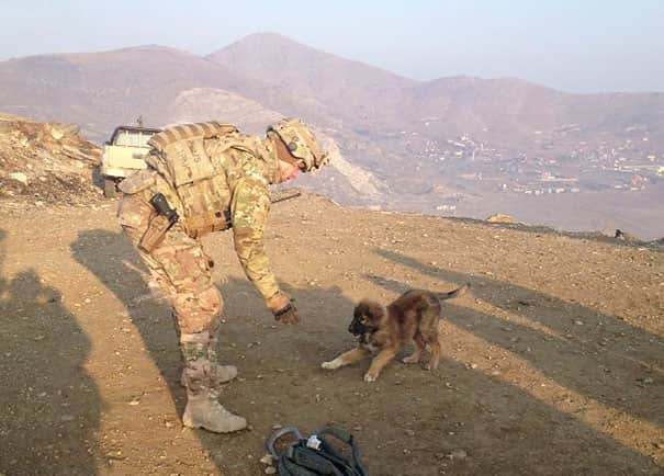 soldier-with-pet-15__605