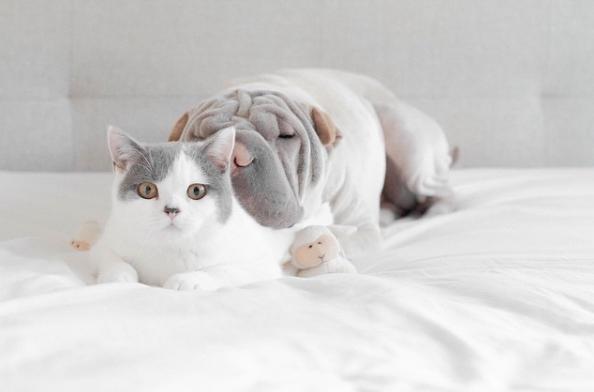 cachorro-e-gato-butler-02a