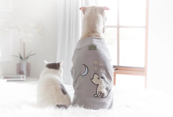 cachorro-e-gato-butler-05a