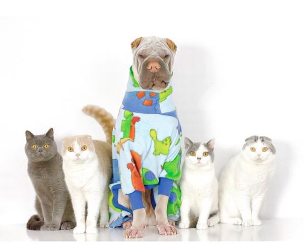 cachorro-e-gatos-01a