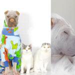 Um cachorro, quatro gatos e as fotos mais adoráveis do dia 2