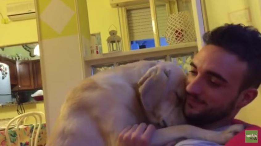 Vídeo de cão pedindo perdão ao dono viraliza na web 2