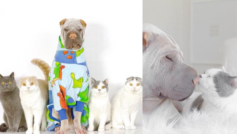 Um cachorro, quatro gatos e as fotos mais adoráveis do dia 1