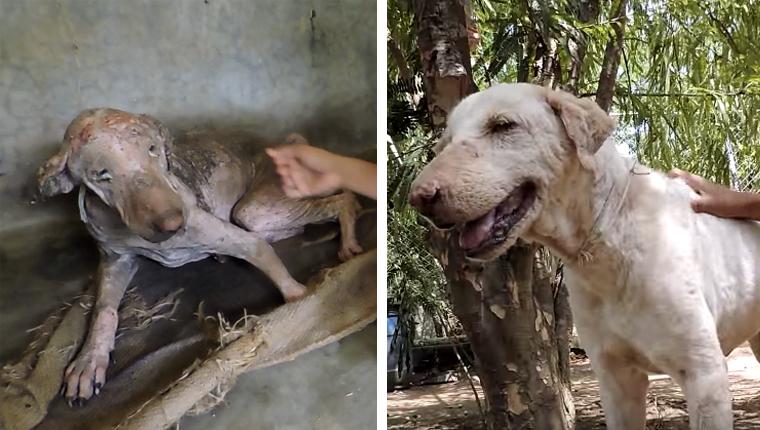 Em 2 meses de tratamento, cachorro extremamente doente tem recuperação espetacular 9