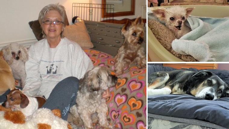 Mulher transforma sua casa em santuário para animais idosos abandonados 1