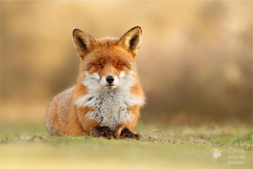 zen-foxes-roeselien-raimond-13__880a