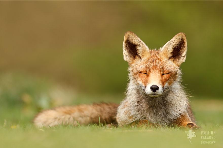zen-foxes-roeselien-raimond-15__880a