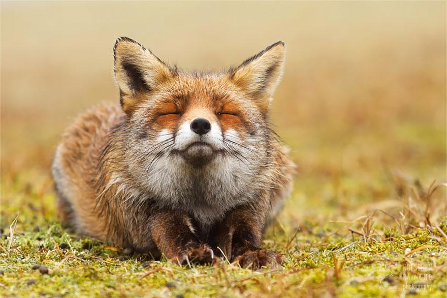 zen-foxes-roeselien-raimond-3__880a