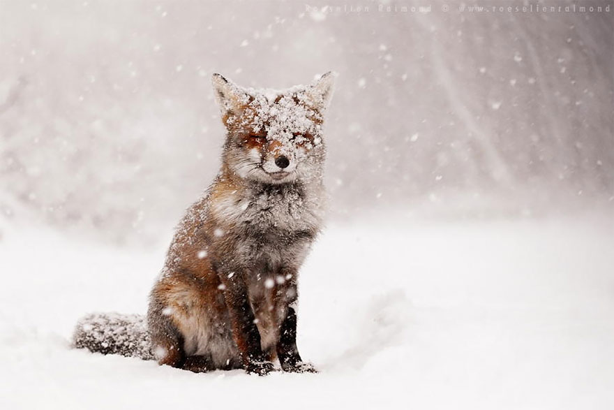 zen-foxes-roeselien-raimond-4__880a