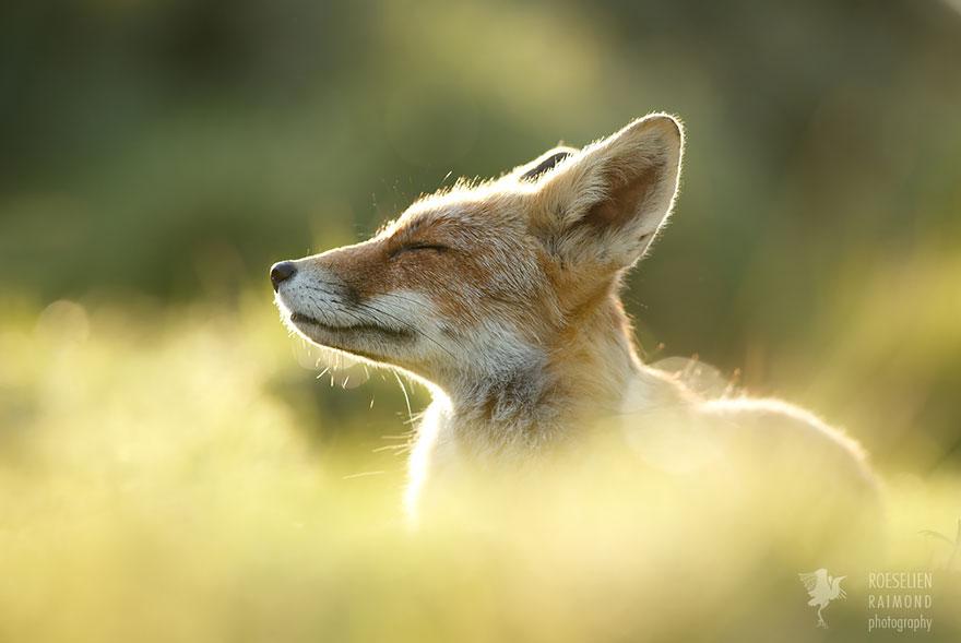 zen-foxes-roeselien-raimond-7__880a