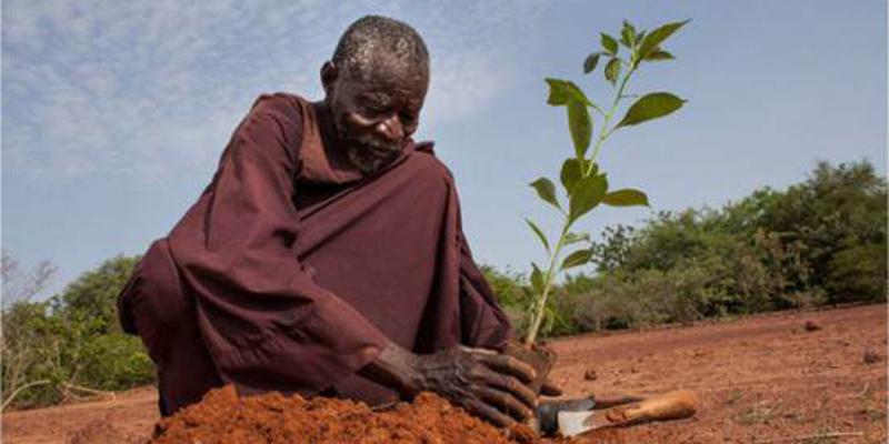 Aos 67 anos, este homem transformou 30 hectares de deserto em terras cultiváveis 1