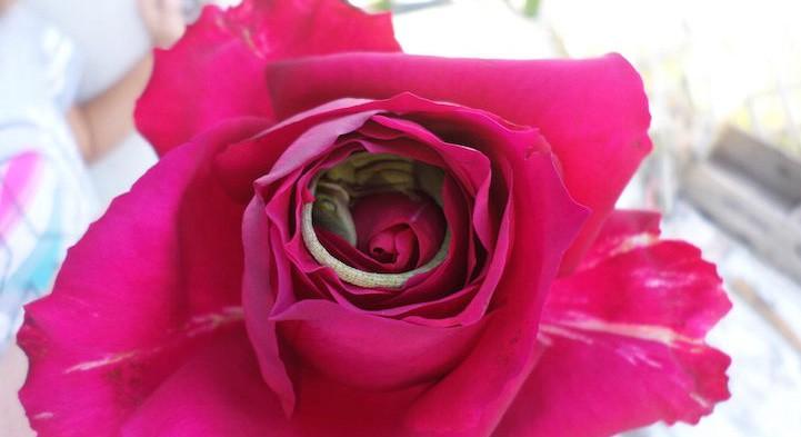 Foto de adorável lagarto dormindo confortavelmente dentro de uma rosa viraliza na web 2
