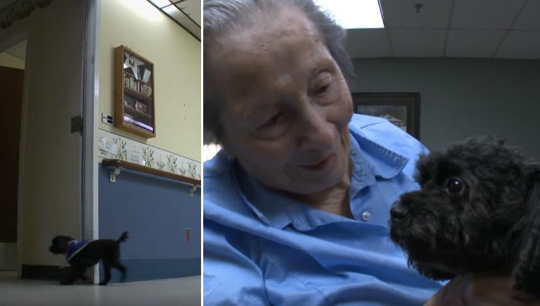 Esta cadelinha pega elevador todos os dias para fazer companhia a idosos de asilo 1