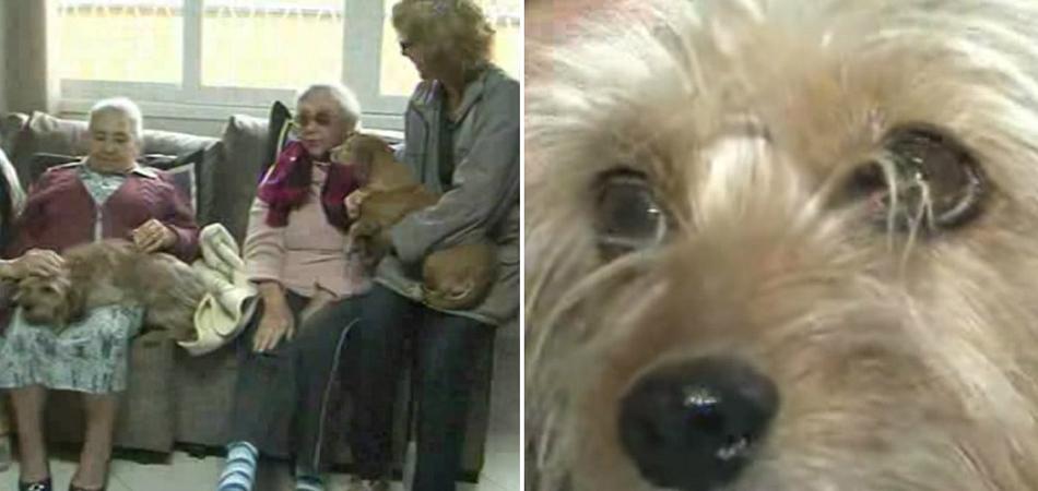 Lar de idosos em Joinville (SC) adota animais idosos resgatados 1