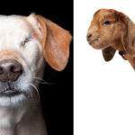 animais com deficiência