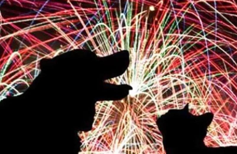 Em respeito aos animais, cidade italiana só faz festa com fogos de artifício silenciosos 2