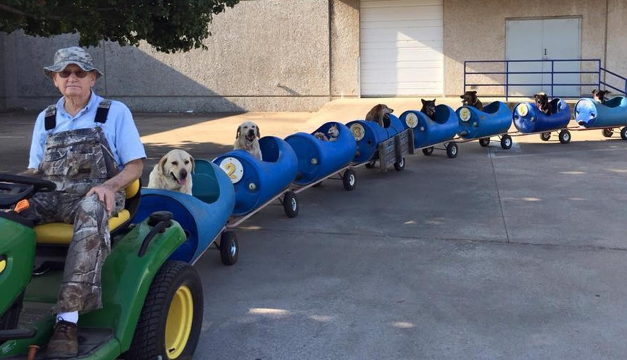 Aposentado cria trem para levar cães abandonados para passear 1