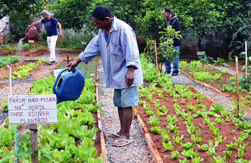 Moradores em situação de rua cultivam horta comunitária em abrigo de SP 2