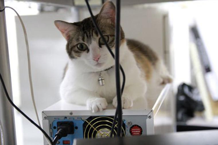 Empresa japonesa compartilha escritórios com 9 gatos para diminuir estresse 3