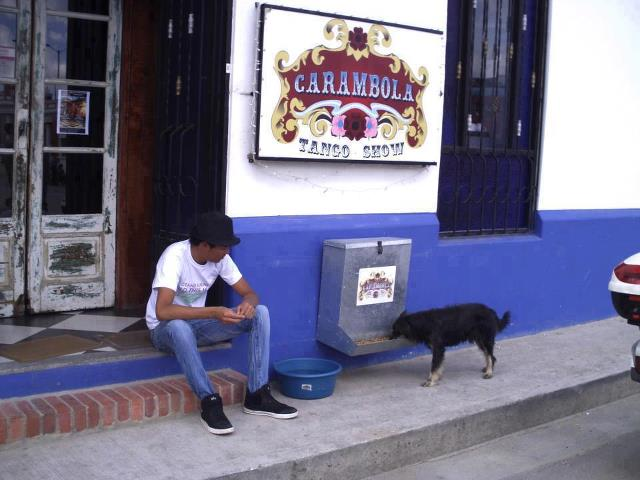 Restaurante colombiano organiza comedouro para alimentar cães abandonados 1