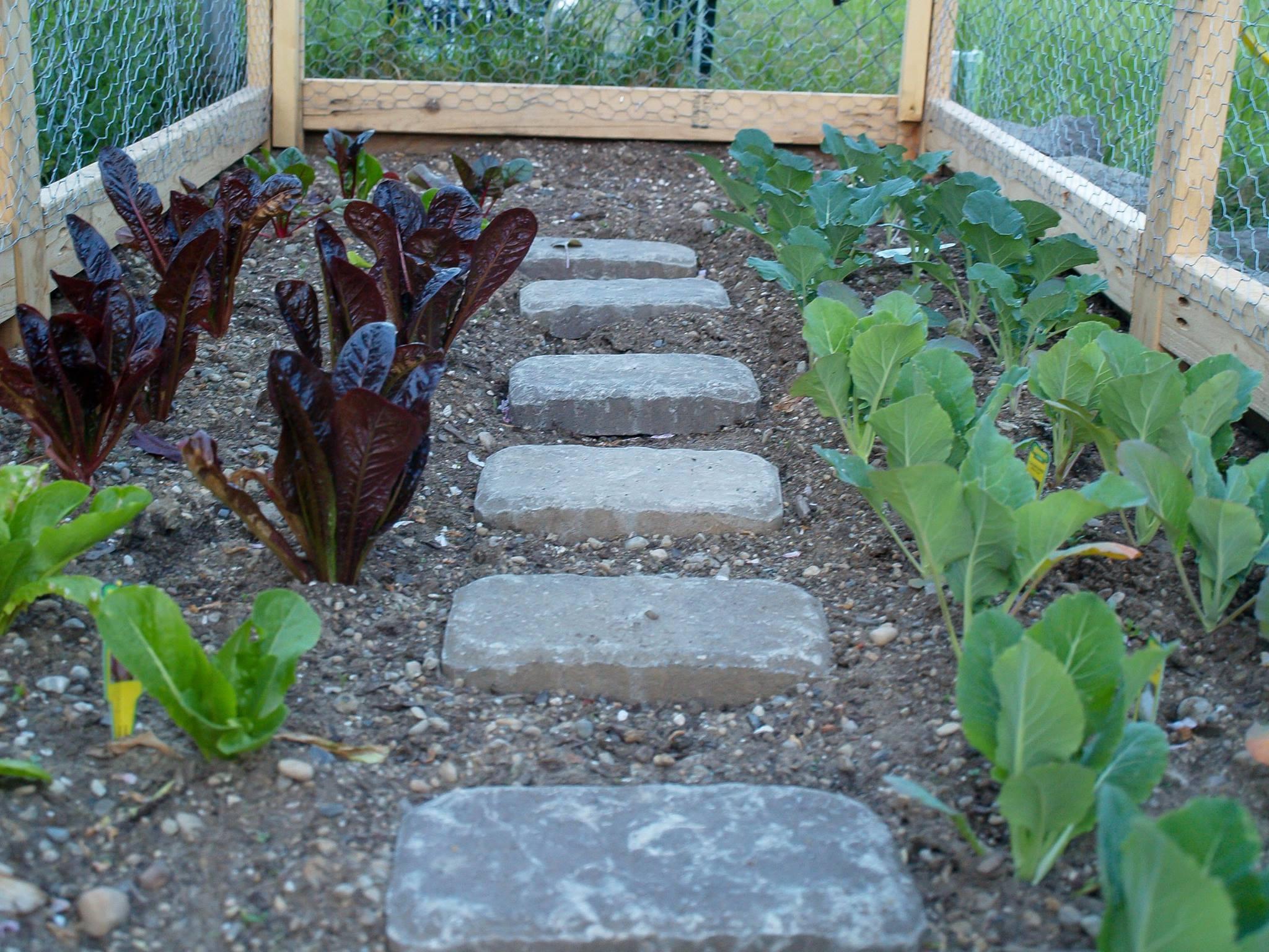 ela cultiva horta em casa 6