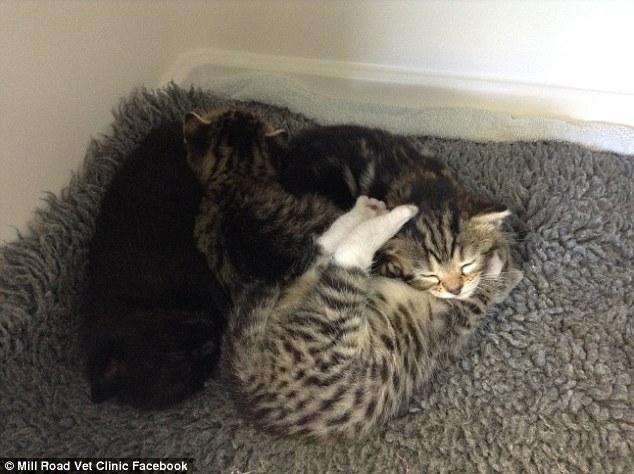 """Gata """"invade"""" clínica veterinária para ficar com seus filhotes abandonados no local 1"""