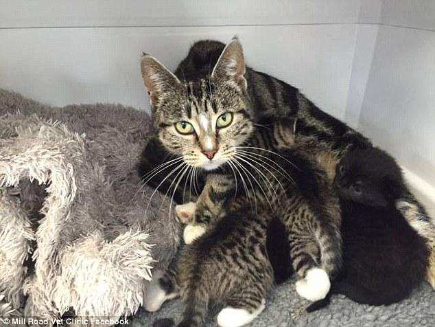 """Gata """"invade"""" clínica veterinária para ficar com seus filhotes abandonados no local 4"""