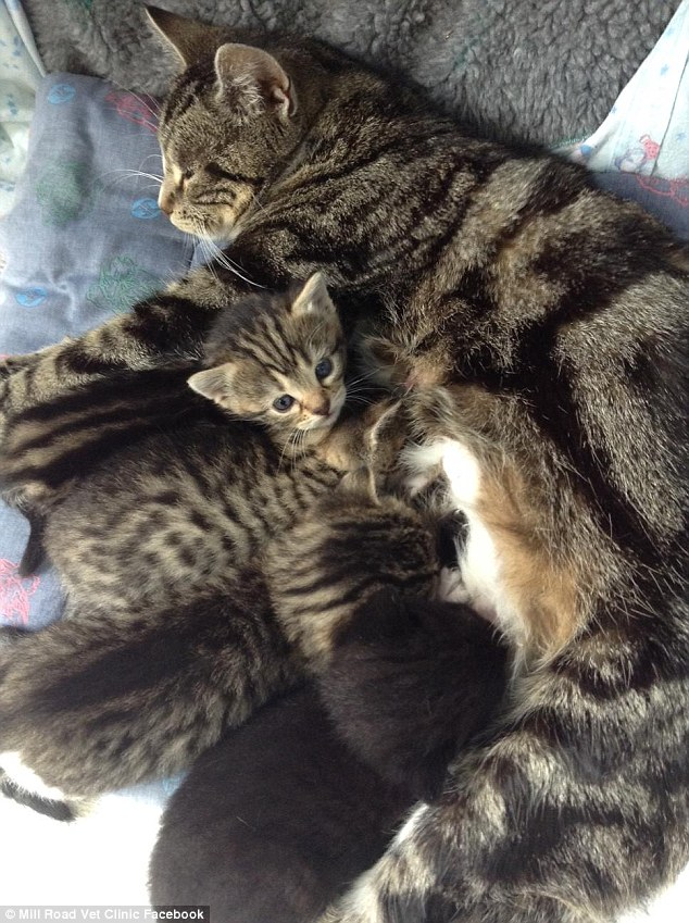 """Gata """"invade"""" clínica veterinária para ficar com seus filhotes abandonados no local 3"""