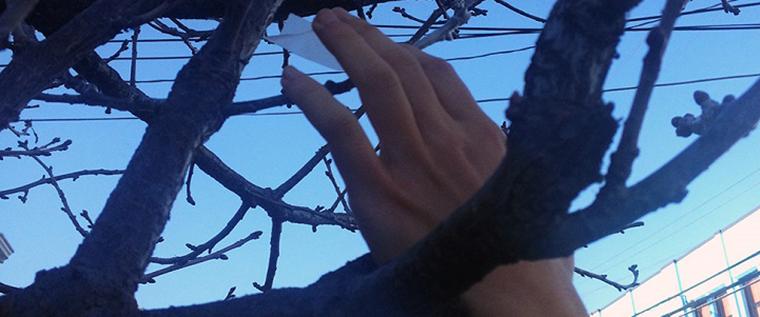 Grupo de guerrilha agrícola está secretamente transformando árvores ornamentais em frutíferas 3